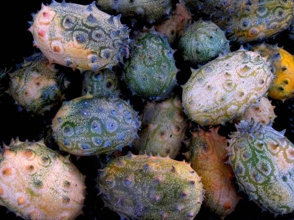 kiwano - African horned melon $1 each